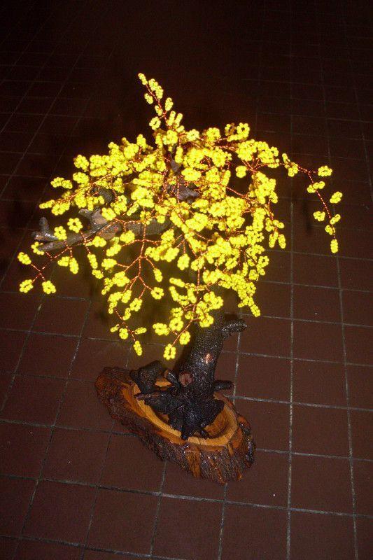 Reconnatre les arbres fleurs blanches de nos jardins (ides pour)